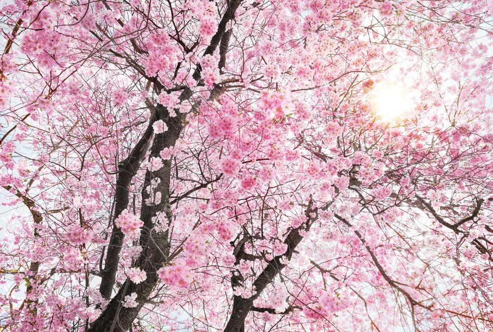 Vlies Fototapete Bloom